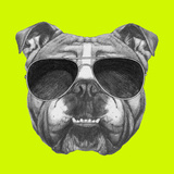 Original Drawing of English Bulldog with Sunglasses. Isolated on Colored Background Poster by  victoria_novak