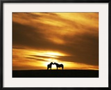 An Equine Kiss Framed Photographic Print by Adrian Campfield