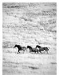 Ranchland 4 Bw Pósters por Murray Bolesta