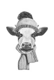 Portrait of Cow with Scarf and Hat. Hand Drawn Illustration. Prints by  victoria_novak