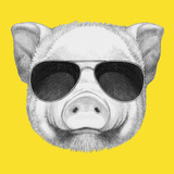 Portrait of Piggy with Sunglasses. Hand Drawn Illustration. Poster by  victoria_novak