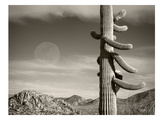 Desert Moon Print by Murray Bolesta