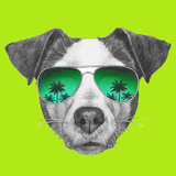 Original Drawing of Jack Russell with Mirror Sunglasses. Isolated on White Background Posters by  victoria_novak