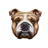 Original Drawing of English Bulldog. Isolated on White Background. Posters by  victoria_novak