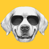 Portrait of Golden Retriever with Sunglasses. Hand Drawn Illustration. Print by  victoria_novak