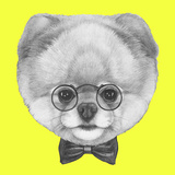 Original Drawing of Pomeranian Dog with Glasses and Bow Tie. Isolated on Colored Background. Prints by  victoria_novak