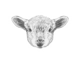 Portrait of Lamb. Hand Drawn Illustration. Print by  victoria_novak