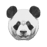 Original Drawing of Panda. Isolated on White Background Prints by  victoria_novak
