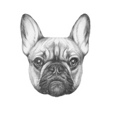 Original Drawing of French Bulldog. Isolated on White Background Prints by  victoria_novak
