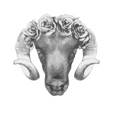 Original Drawing of Ram with Roses. Isolated on White Background Prints by  victoria_novak