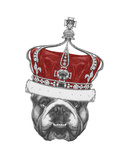 Original Drawing of English Bulldog with Crown. Isolated on Colored Background Prints by  victoria_novak