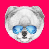 Portrait of Pomeranian with Mirror Sunglasses. Hand Drawn Illustration. Prints by  victoria_novak