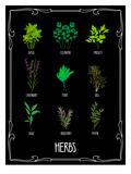 Garden Herbs Plakat af Brooke Witt