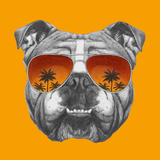 Original Drawing of English Bulldog with Mirror Sunglasses. Isolated on Colored Background. Print by  victoria_novak