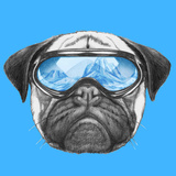 Portrait of Pug Dog with Ski Goggles. Hand Drawn Illustration. Prints by  victoria_novak