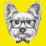 Portrait of Yorkshire Terrier Dog with Glasses and Bow Tie. Hand Drawn Illustration. Prints by  victoria_novak