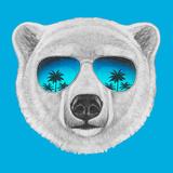 Portrait of Polar Bear with Mirror Sunglasses. Hand Drawn Illustration. Prints by  victoria_novak