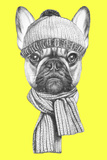Portrait of French Bulldog with Scarf and Hat. Hand Drawn Illustration. Prints by  victoria_novak