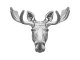 Portrait of Moose. Hand Drawn Illustration. Prints by  victoria_novak