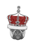 Original Drawing of French Bulldog with Crown. Isolated on White Background Art by  victoria_novak