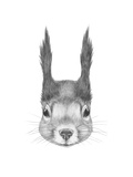 Portrait of Squirrel. Hand Drawn Illustration. Posters by  victoria_novak