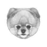 Original Drawing of Pomerania. Isolated on White Background. Premium Giclee Print by  victoria_novak