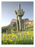 Desert Sentinel 2 Posters by Murray Bolesta