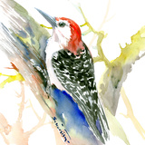 Red Bellied Woodpecker Affiches par Suren Nersisyan