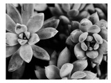 Black & White Succulents Posters by Melinda Wood