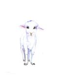Lamb 2 Posters by Suren Nersisyan