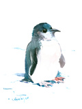 Baby Penguin 2 Prints by Suren Nersisyan