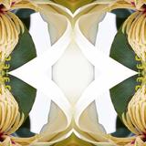 Baroque Magnolia2 Posters by Rose Anne Colavito