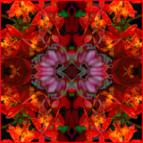 Fire Orchids Prints by Rose Anne Colavito