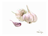 Garlic Posters by Suren Nersisyan