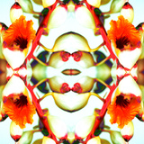 Ginger5 Prints by Rose Anne Colavito