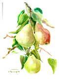 Pears Prints by Suren Nersisyan