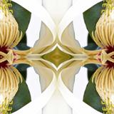 Baroque Magnolia Art by Rose Anne Colavito
