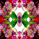 Neon Rose redux2 Prints by Rose Anne Colavito