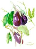 Eggplants Prints by Suren Nersisyan