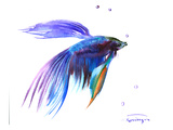Betta Fich Prints by Suren Nersisyan