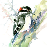 Woodpecker Posters by Suren Nersisyan