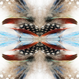 Indian Feathers Poster by Rose Anne Colavito
