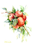 Red Apples 1 Posters by Suren Nersisyan