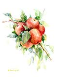 Red Apples 1 Prints by Suren Nersisyan