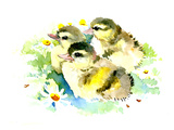 Baby Ducks Prints by Suren Nersisyan