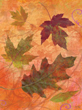 Swirling Autumn Leaves Poster by Bee Sturgis