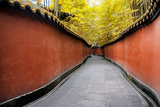 China 10MKm2 Collection - Alley Bamboo Photographic Print by Philippe Hugonnard