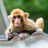 China 10MKm2 Collection - Monkey Portrait Photographic Print by Philippe Hugonnard