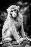 China 10MKm2 Collection - Monkey Portrait Metal Print by Philippe Hugonnard