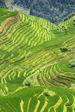 China 10MKm2 Collection - Rice Terraces - Longsheng Ping'an - Guangxi Metal Print by Philippe Hugonnard